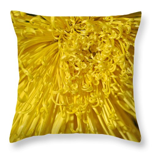 Clay Throw Pillow featuring the photograph Yellow Strings by Clayton Bruster
