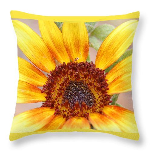 Sunflower Throw Pillow featuring the photograph Yellow Sunflower by Amy Fose