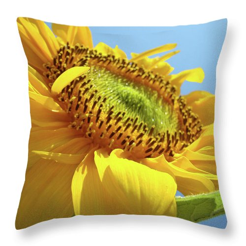 Sunflower Throw Pillow featuring the photograph Yellow Sunflower Blue Sky Art Prints Baslee Troutman by Baslee Troutman