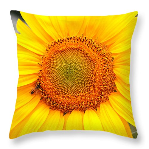 Sunflower Throw Pillow featuring the photograph Yellow Sunflower With Bee by Amy Fose