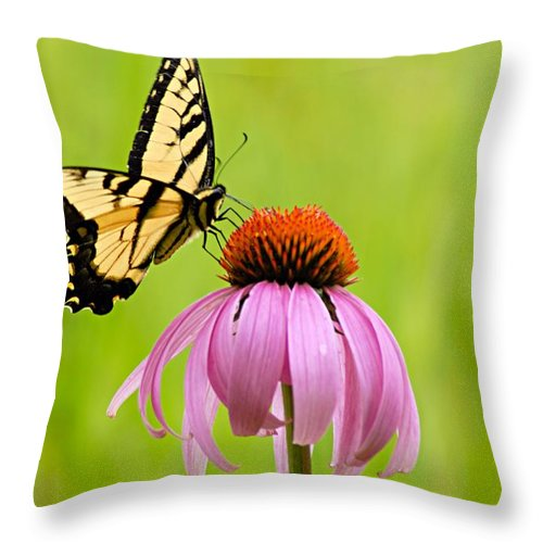 Yellow Swallowtail Throw Pillow featuring the photograph Yellow Swallowtail On Cone Flower by Larry Ricker