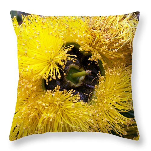 Flower Throw Pillow featuring the photograph Yellow Tree Flower by Amy Fose