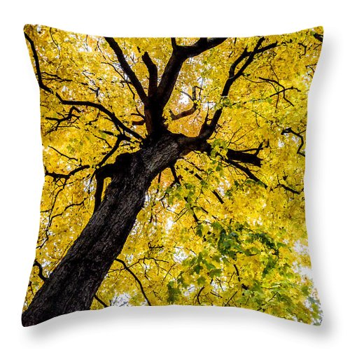 Tree Throw Pillow featuring the photograph Yellow Tree by Michael Cummiskey