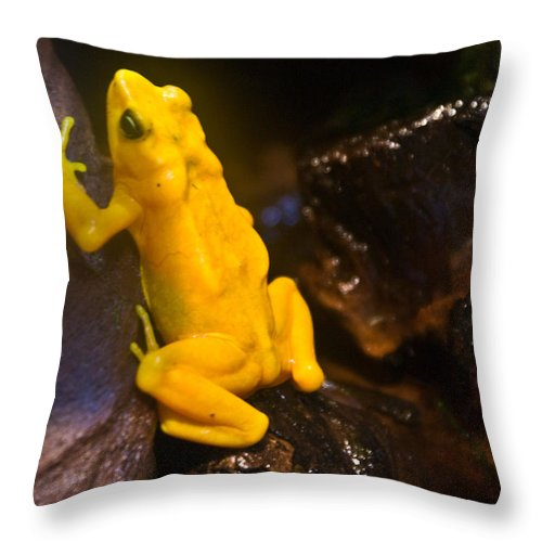 Frog Throw Pillow featuring the photograph Yellow Tropical Frog by Douglas Barnett