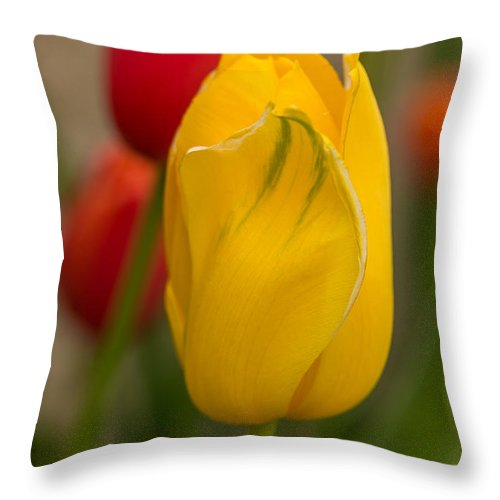 Flowers Throw Pillow featuring the photograph Yellow Tulip by Beverly Tabet