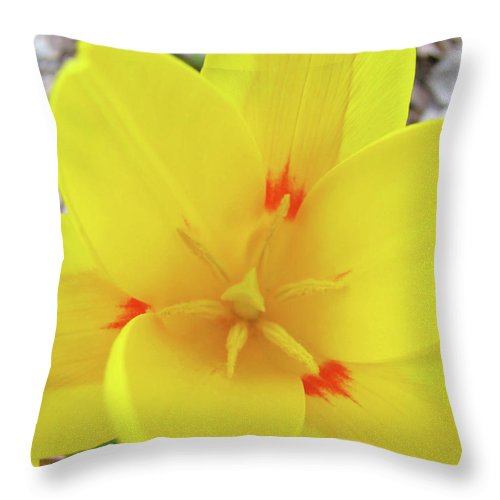 �tulips Artwork� Throw Pillow featuring the photograph Yellow Tulip Flower Spring Flowers Floral Art Prints by Baslee Troutman