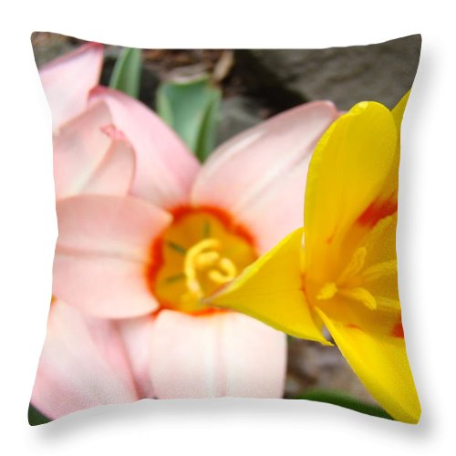 Tulip Throw Pillow featuring the photograph Yellow Tulips Art Prints Pink Tulips Spring Florals Baslee Troutman by Baslee Troutman
