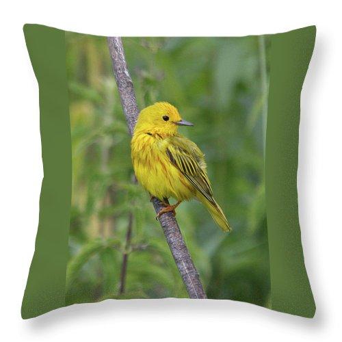 Yellow Warbler Throw Pillow featuring the photograph Yellow Warbler by Doris Potter