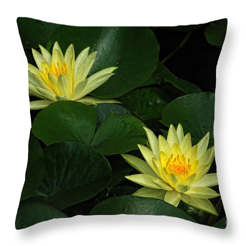 Water Lily Throw Pillow featuring the photograph Yellow Water Lilies by Edward Sobuta