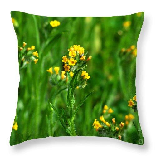 Artoffoxvox Throw Pillow featuring the photograph Yellow Wildflower Photograph by Kristen Fox