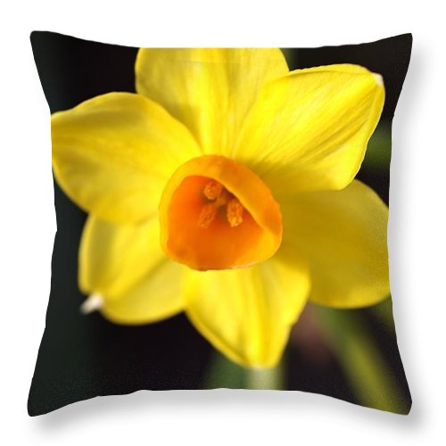 Daffodil Throw Pillow featuring the photograph Yellows Of Jonquils by Joy Watson