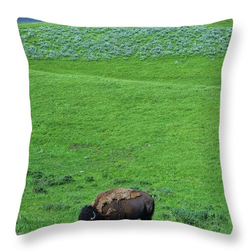 Yellowstone Bison Throw Pillow featuring the photograph Yellowstone Bison by Allen Beatty