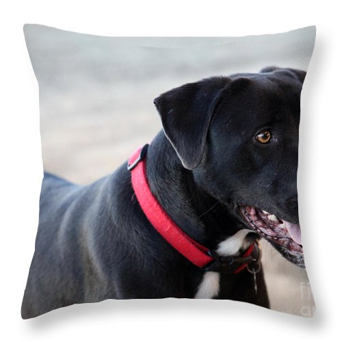 Dogs Throw Pillow featuring the photograph Yes I Want To Play by Amanda Barcon