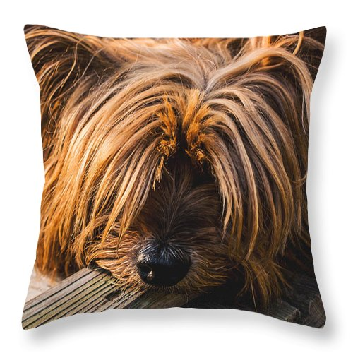 Yorkshire Throw Pillow featuring the photograph Yorkshire Terrier Biting Wood by Fbmovercrafts
