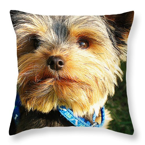 Dog Art Throw Pillow featuring the painting Yorkshire Terrier by Queso Espinosa