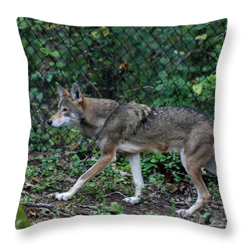 Wolf Throw Pillow featuring the photograph You Can Run You Can Hide by David Dunham