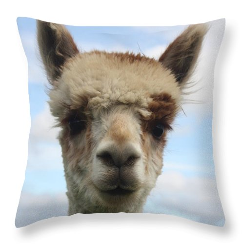 Nature Photographs Throw Pillow featuring the photograph You Looking At Me by David Matthews