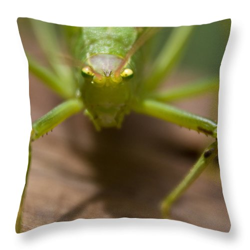 Katydid Throw Pillow featuring the photograph You Said What by Douglas Barnett