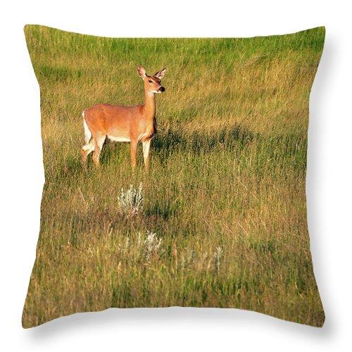 Ekalaka Throw Pillow featuring the photograph Young Deer by Todd Klassy