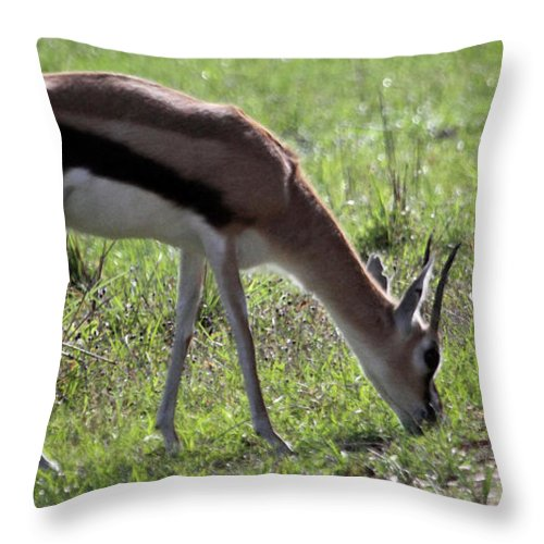 Gazelle Throw Pillow featuring the photograph Young Gazelle by Mary Haber