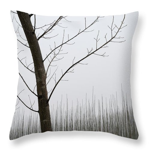 Color Throw Pillow featuring the photograph Young Ploplars by Guido Montanes Castillo