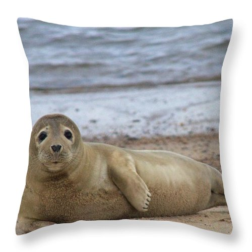 Seal Throw Pillow featuring the photograph Young Seal Pup On Beach - Horsey, Norfolk, Uk by Gordon Auld