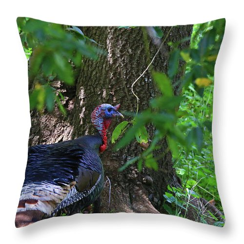 Throw Pillow featuring the photograph Young Tom by Craig Corwin