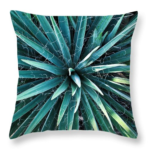 Yucca Throw Pillow featuring the photograph Yucca Plant Detail by Douglas Barnett