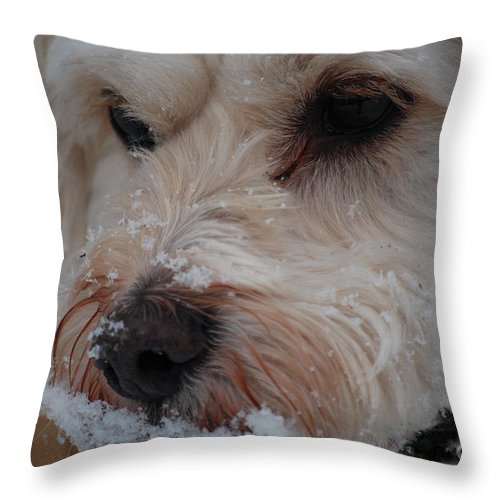 Dog Throw Pillow featuring the photograph Yummy Snow by Lori Tambakis