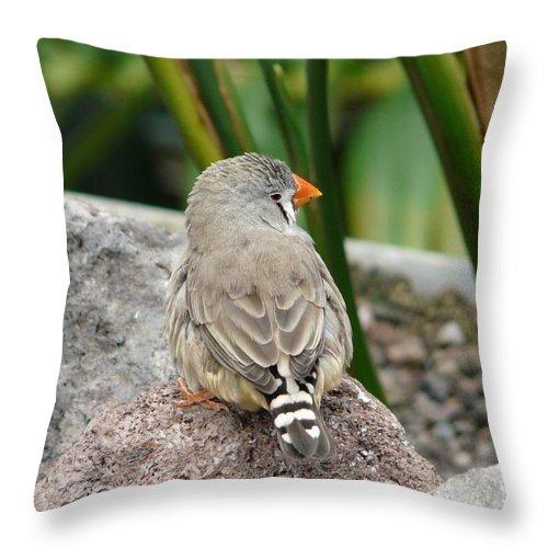 Bird Throw Pillow featuring the photograph Zebra Finch by Valerie Ornstein