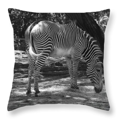 Animal Throw Pillow featuring the photograph Zebra In Black And White by Rob Hans