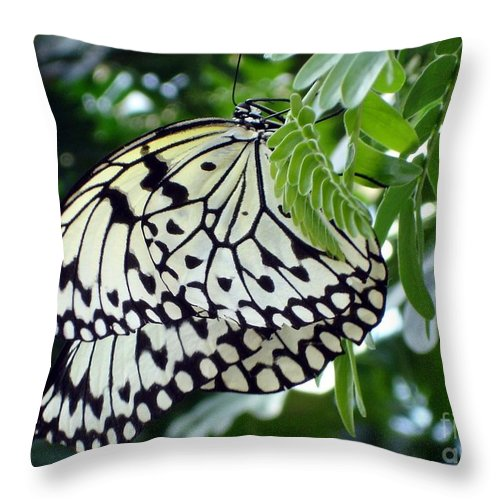 Butterfly Throw Pillow featuring the photograph Zebra In Disguise by Shelley Jones