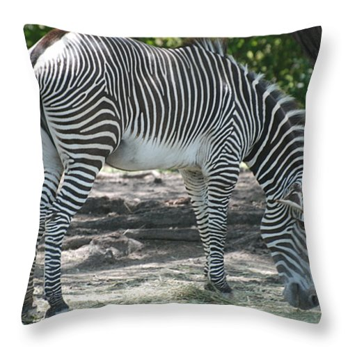 Animal Throw Pillow featuring the photograph Zebra by Rob Hans