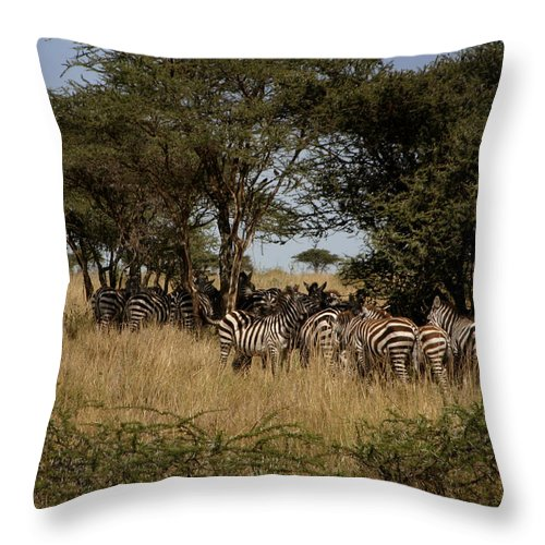 Serengeti Throw Pillow featuring the photograph Zebra Seeking Shade by Joseph G Holland