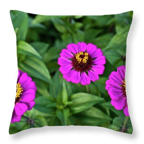 Zennia Throw Pillow featuring the photograph Zennia Triplet by Douglas Barnett