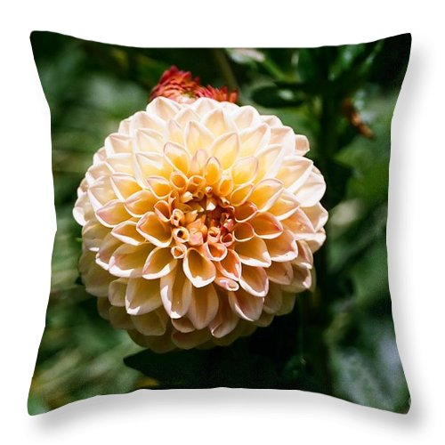 Zinnia Throw Pillow featuring the photograph Zinnia by Dean Triolo