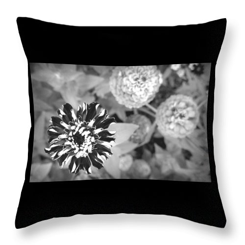 Black And White Throw Pillow featuring the photograph Zinnia In Black And White by Lois Braun