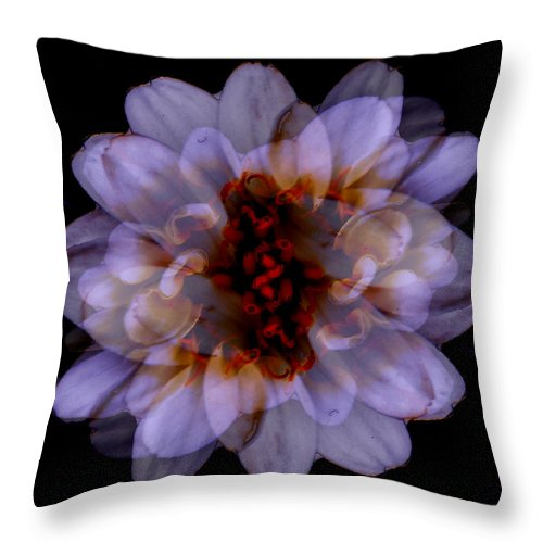 Blotanical Throw Pillow featuring the mixed media Zinnia On Black by Ruth Palmer