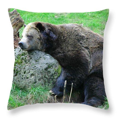 Bear Throw Pillow featuring the photograph Bear Sleeping On A Rock. by Oscar Williams