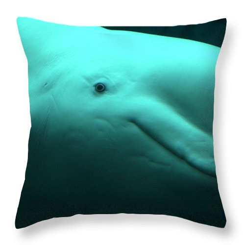 One Animal Throw Pillow featuring the photograph Beluga Whale by Lingbeek