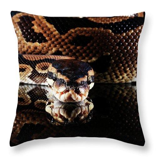 Copenhagen Throw Pillow featuring the photograph Burmese Python by Henrik Sorensen