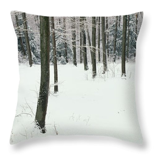 Photography Throw Pillow featuring the photograph Chestnut Ridge Park Orchard Park Ny Usa 1 by Panoramic Images