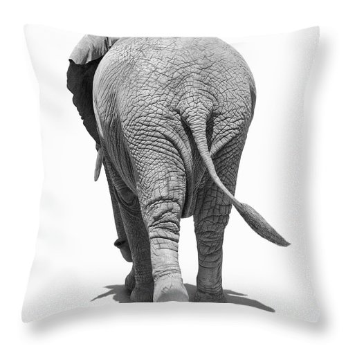 Shadow Throw Pillow featuring the photograph Elephants Behind by Burazin