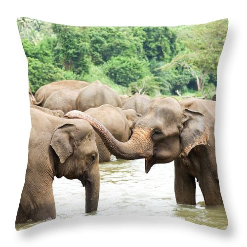 Animals In The Wild Throw Pillow featuring the photograph Elephants In River by Lp7