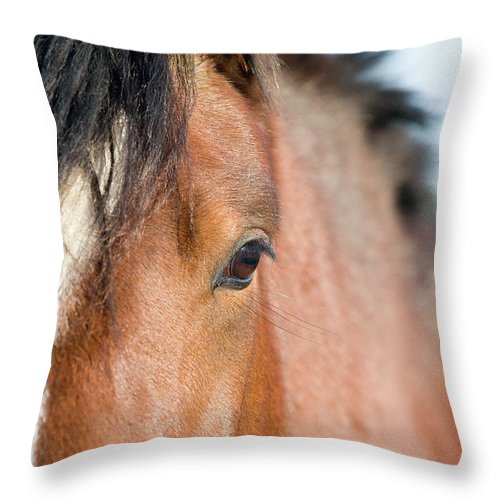 Horse Throw Pillow featuring the photograph Equine Beauty by Dageldog