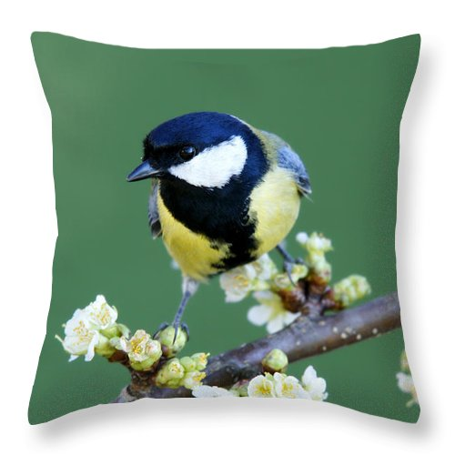 Songbird Throw Pillow featuring the photograph Great Tit On A Blossoming Twig by Schnuddel