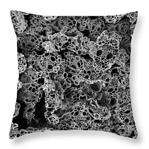 Microscope Throw Pillow featuring the photograph Lemongrass Cross Section, Sem by Sheri Neva
