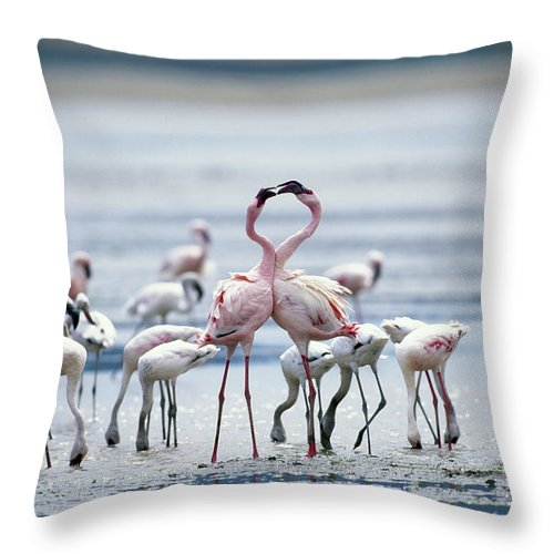 Tanzania Throw Pillow featuring the photograph Lesser Flamingoes Phoeniconaias Minor by Paul Souders