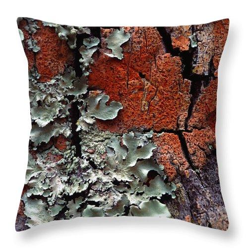 Built Structure Throw Pillow featuring the photograph Lichen On Tree Bark by John Foxx