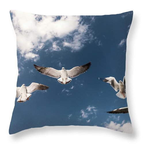 Animal Themes Throw Pillow featuring the photograph Myanmar, Inle Lake, Seagulls Inflight by Martin Puddy